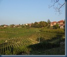 The vineyards of Piemonte.