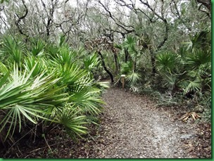 Gamble Rogers Nature Walk 015