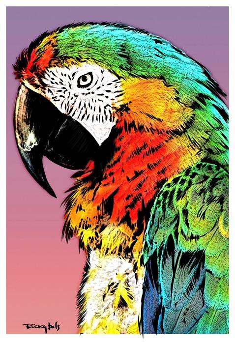 papagaio3_resize