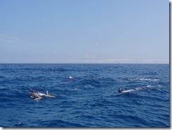 ハワイ島イルカと泳ぐドルフィンスイム
