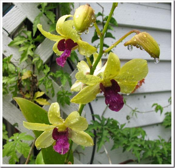 04-30-d-orchids