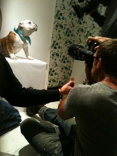 Honey struck a pose for Phibbs and a local camera man from NBC news!  She's a natural!