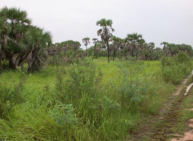 Kwanda grassland, 3 July 2007. Photo: Falcanary / wikimedia.org