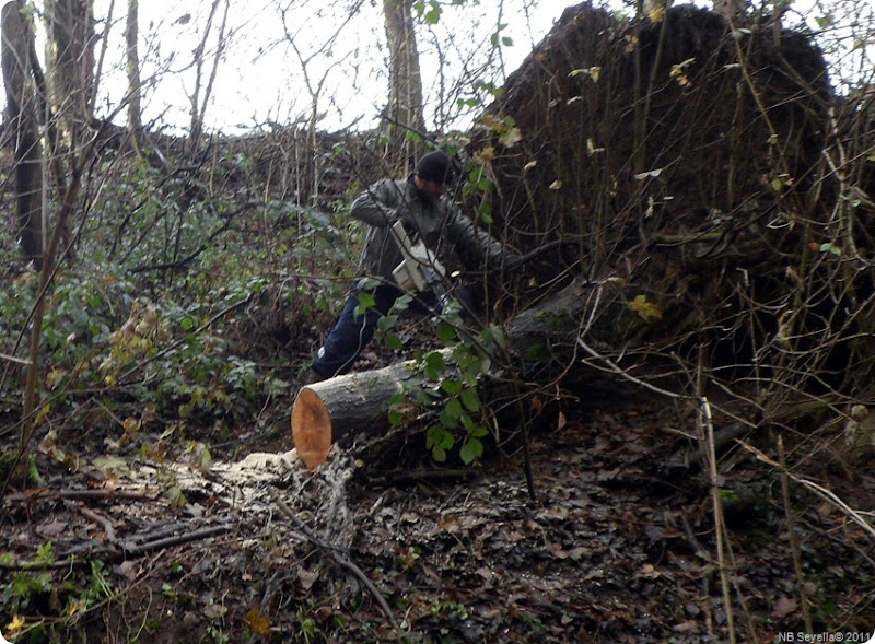 SAM_0022 Lumberjack