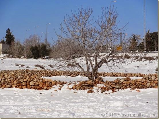 2013-12-17 Snow 002