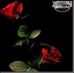 Flores-LoBocAS11