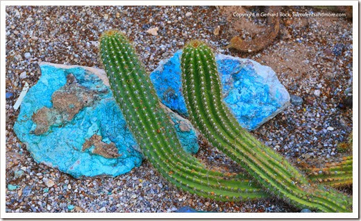 131203_TucsonBotanicalGarden_124