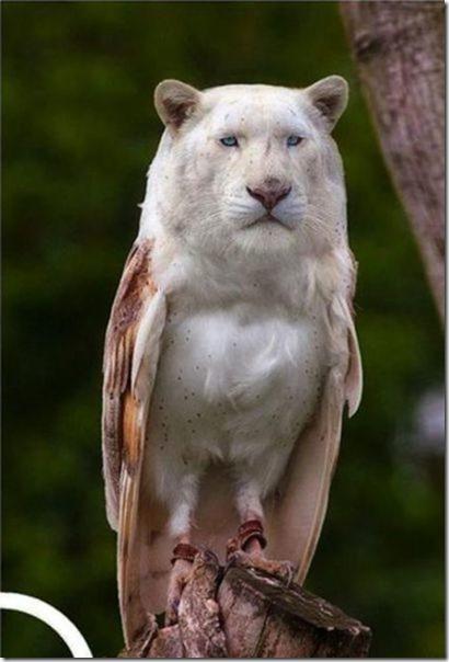 hybrid-animals-photoshop-18