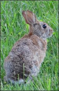 hare0508 (4)