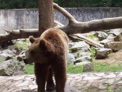 2004.05.26-004 ours brun