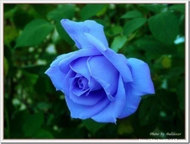 san valentin flores (23)