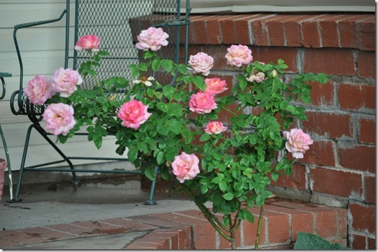 06-08-13 flowers 02