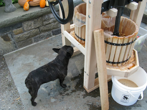 Sharkey picked a lot of juicy apples so I guess it's time to get the cider press in motion.