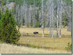 Day15Yellowstone Moose far