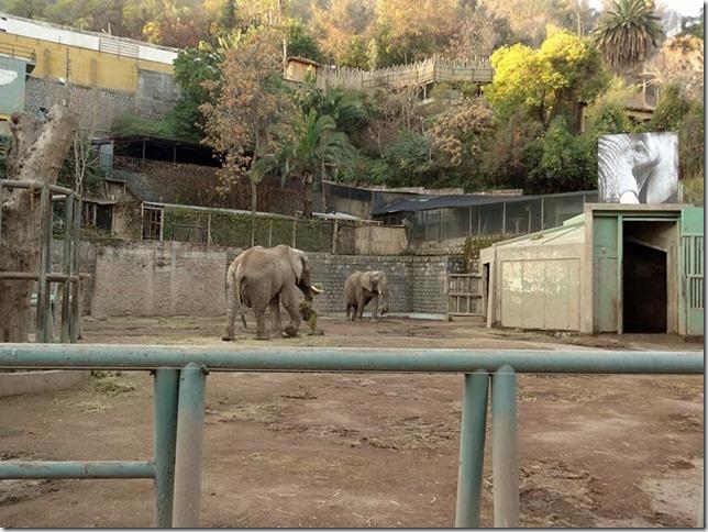 Santiago_Zoo_DSC03984