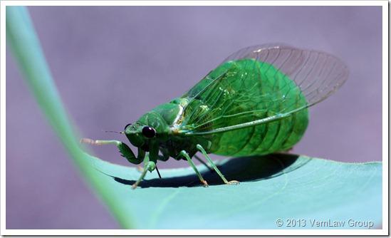 CicadaSecretIMG4107