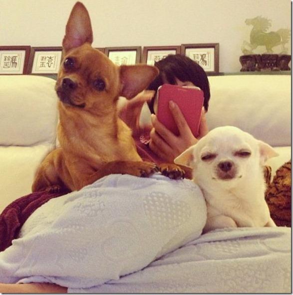 cute-funny-animals-6