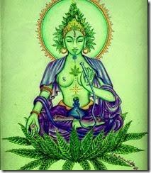 santa maria Shiva Cannabis