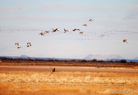 4. ducks n cranes-kab