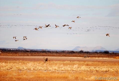4. ducks n cranes-kab