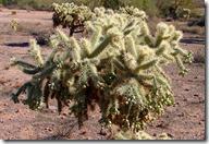 Superstition Mtns. Mesa, AZ 005