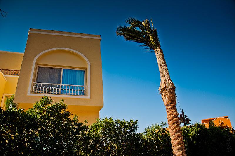 Отель Caribean World Resort Soma Bay. Хургада. Египет. Пальма хорошо показывает, что, не смотря на жару и теплынь, на дворе ноябрь и ветер бывает сильным.