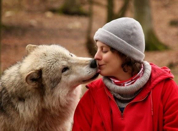 2D9842860-131203-coslog-wolf-wolfsciencecenter
