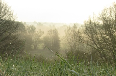 Funkelgras und Morgendunst