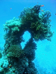 St John s Coral Garden 001