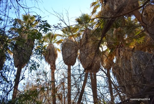 Circle of Palms