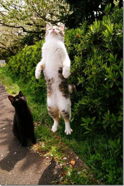 cats-timed-perfectly-11