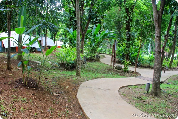 chok chai farm camp (6)