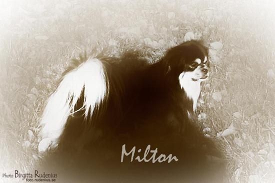 sepia_20111025_milton