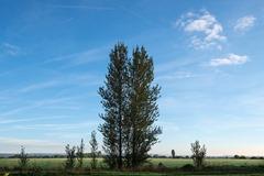 131006, Bognor Trees 060 ecopy