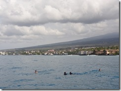 ハワイ島イルカとドルフィンスイム