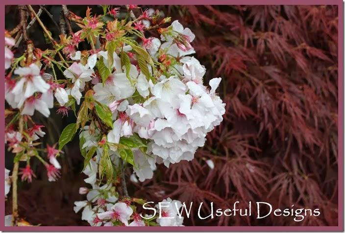 Spring garden blossom 2