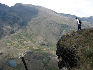 Chingaza-Sur-Organos (12).jpg