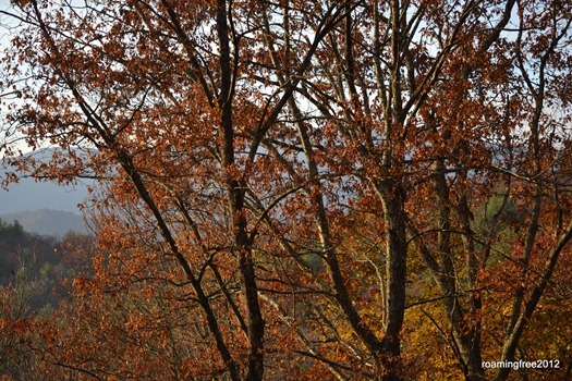 fall colors_3