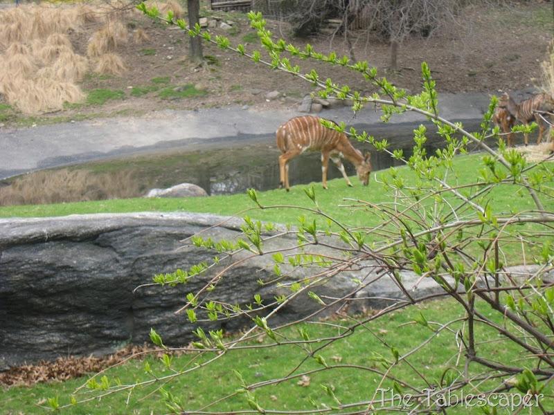 Bronx Zoo1