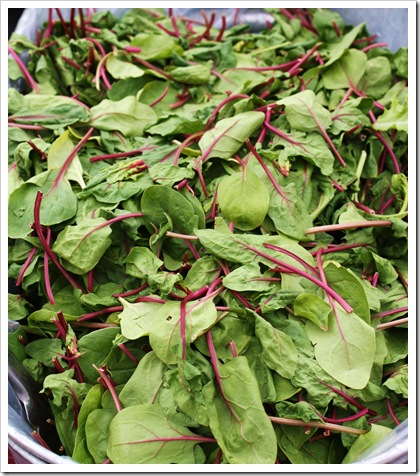 red spinach little seed