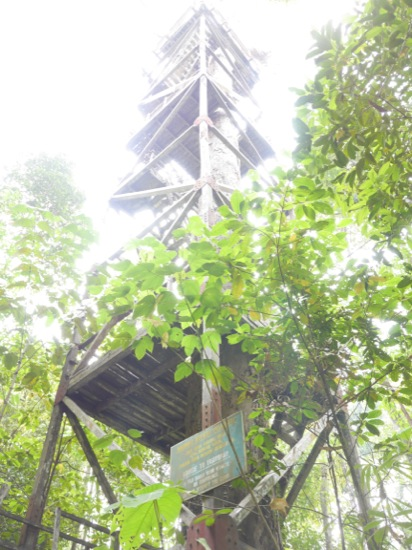 The now closed tree tower from which you were able to get views across the canopy.