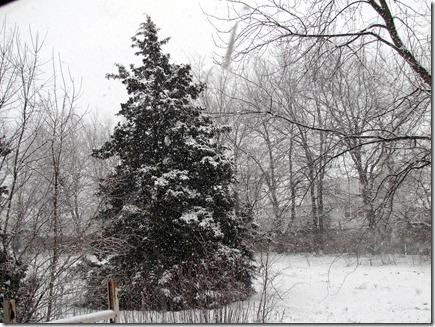 Snow12-31-12f