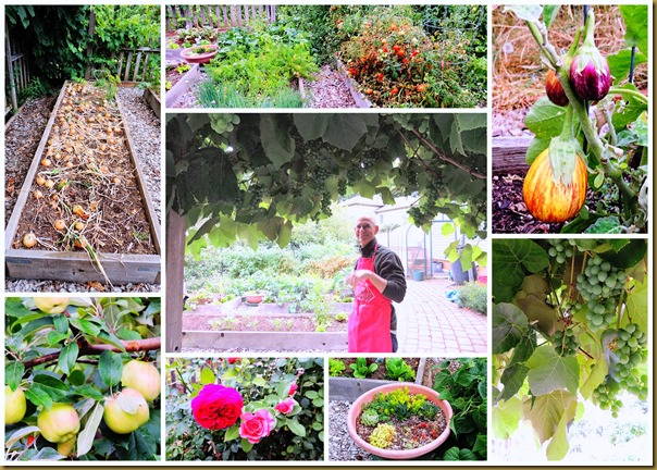 tommys garden