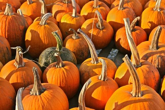 Pumpkin Farm Stand