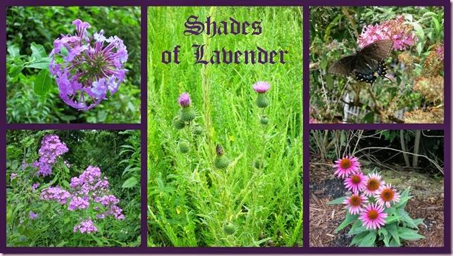 lavendertext