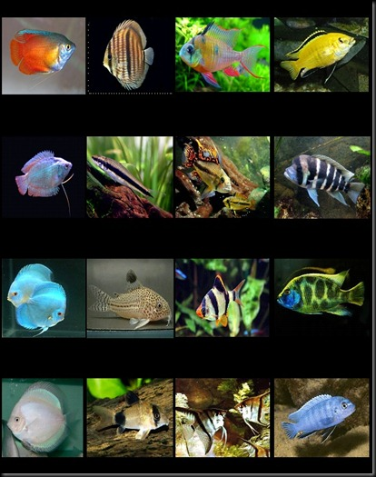 Catalo peces 1