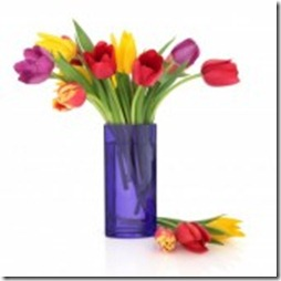 9601871-tulip-flowers-in-rainbow-colours-in-a-blue-glass-vase-and-loose-isolated-over-white-background