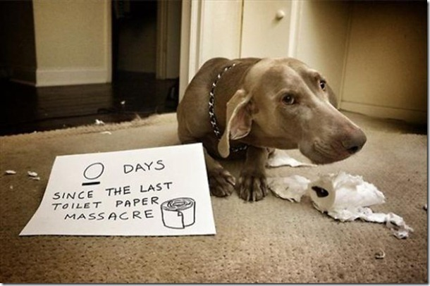 dog-shaming-bad-3