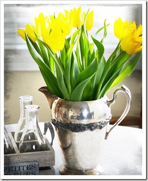 tulips blackenhiet
