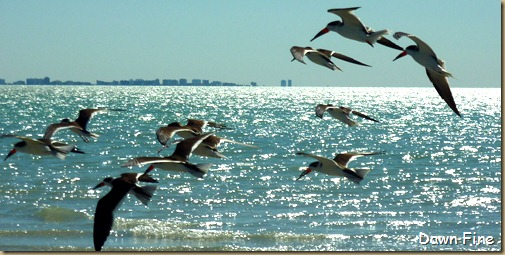 Sanibel Shell and birds_159